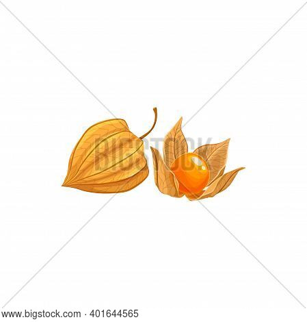 Physalis Fruit, Tropical Exotic Food, Vector Isolated Icon. Physalis Or Golden Berry Fruits Peeled A