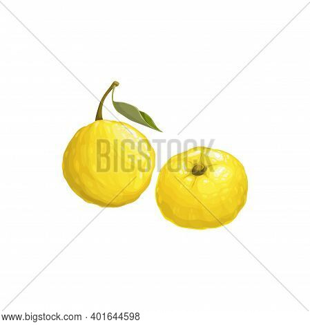 Yuzu Fruit, Exotic Japanese Citrus Fruits Icon, Vector Tropical Food. Yuzu Fruits With Leaf, Tropic