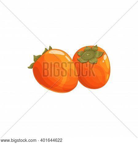 Persimmon Kaki Fruit, Tropical Exotic Food, Vector Isolated Icon. Persimmon Kaki Fruits, Tropic Farm
