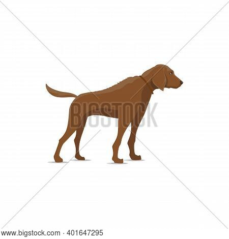 Dog Isolated Vector Icon. Hunting Canine Vector Animal, Large Pointer Hound Breed