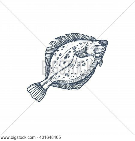 Flounder Flatfish Species Isolated Monochrome Sketch. Vector Demersal Fish Living At Bottom Of Ocean