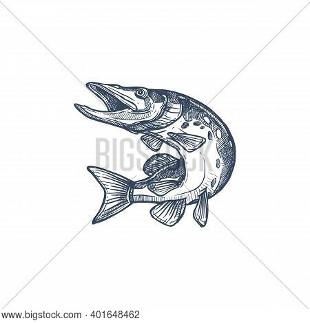 Salmon Or Trout Grayling Whitefish Isolated Monochrome Sketch. Vector Underwater Animal, Salmon Hand