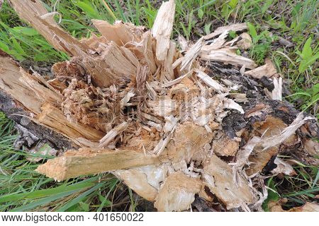 Rotten Tree Stump Fell To Pieces, Natural Backdrop