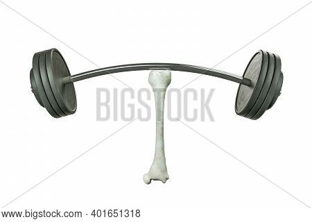 Close Up Of Human Thigh Bone Lifting Barbells In White Background. Osteoporosis World Day Or Strong