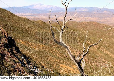 Remnants Of A Burnt Chaparral Tree Caused From A Past Wildfire On A Mountain Ridge Surrounding A Can