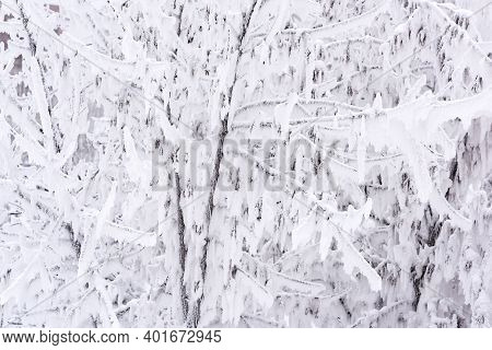 Trees Densely Covered With Snow And Frost Close Up