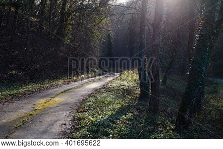Cycling through forest on winter day. Rocky road in forest nature. Green forest road. Nature. Road. Natural environment. Forest nature. Road in nature. Nature environment, branches and trees. Travel in nature.