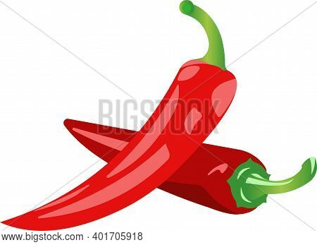 Two Pods Of Red Chili Peppers Vector Illustration.