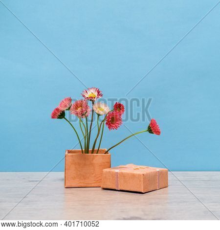 Summer Creative Still Life In Minimal Style. Pink Marguerite Daisy Flowers Bouquet In Little Gift Bo