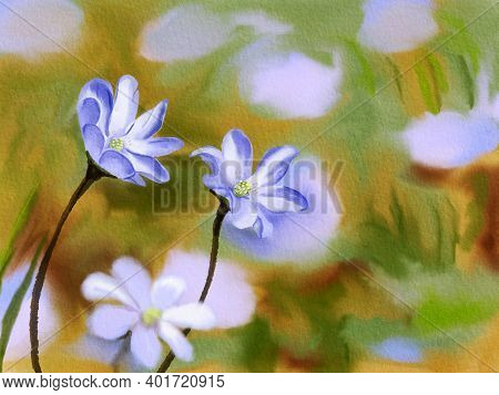 Blue Flowers Of Liverleaf. Hand Drawn Watercolor Illustration. Sping Seasonal Concept.