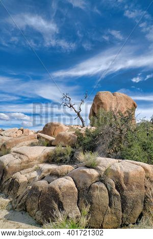 Huge Rocks And Dry Dead Tree In The Mojave Desert At Joshua Tree National Park