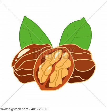 Tasty Walnuts And Cracked Walnut With Green Leaves In Cartoon Style Isolated On White Background. Ve