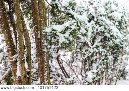 Bush and plants covered with fresh snow inwinter