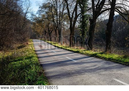 Cycling through forest on winter day. Road through forest nature. Green forest road. Nature. Road. Natural environment. Forest nature. Road in nature. Nature environment, branches and trees. Travel in nature.