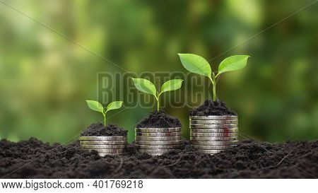 Coins And Plants Are Grown On A Pile Of Coins For Finance And Banking. The Idea Of Saving Money And