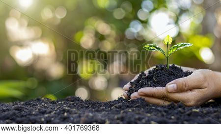 Close-up Of A Human Hand Holding A Seedling Including Planting Seedlings, Earth Day Concept, Global