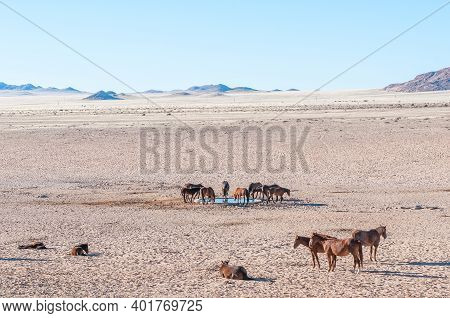 A View Of Wild Horses Of The Namib At The Waterhole At Garub Near Aus