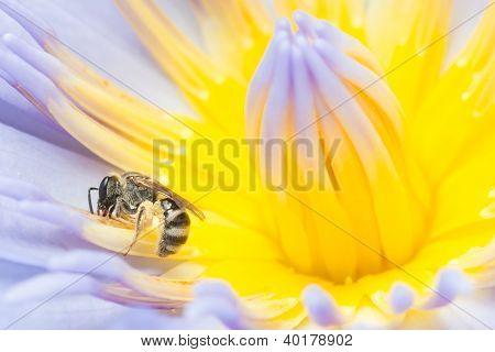 Bee Working Hard Collecting Pollen