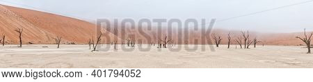 Sossusvlei, Namibia - June 23, 2012: Panorama Of Deadvlei Near Sossusvlei In Namibia. Dead Trees, Sa