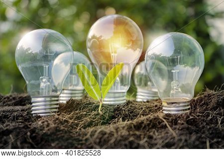 Renewable Energy, Lightbulb And Small Tree Growth On Soil With Sunset. Solar Energy Concept.