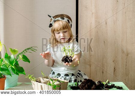 Little Baby Girl Gardener With Plants In The Room At Home. Transplants Flowers. Watering And Caring