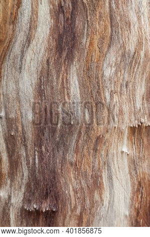 Background Texture Of A Tree Trunk Without Bark