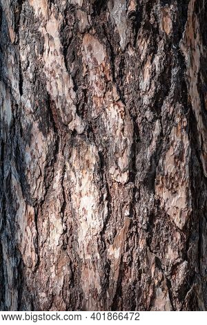 Bark Of Pine Tree. The Texture Of Spruce Bark. Seamless Tree Bark Background. Brown Texture Of The O