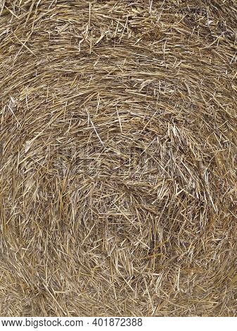 Dry Straw Texture. Yellow Straw Grass Background. Close-up Of A Typical Bale Of Straw. Rolled Up Bal