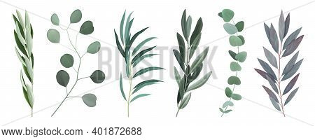 Eucalyptus 6 Twigs Branches With Silvery Round And Oval Elongated Grey Green Leaves Realistic Set Ve