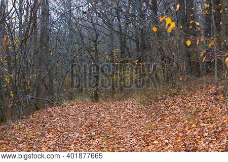 Autumn landscape with fallen leafage in forest