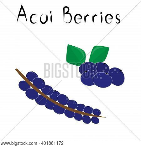 Acai Berries. Healthy Detox Natural Product. Organik Dietary Supplement Fruit. Superfood, Berry For