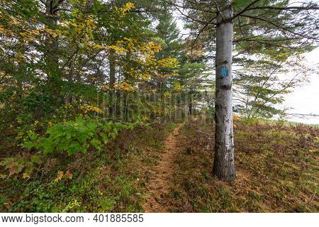 Hiking Trail Through Forest. Blue Blaze On Tree Marks The Way Forward Through The Forest On The Nort