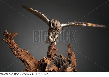 Beautiful Eagle Owl On Tree Against Grey Background. Predatory Bird