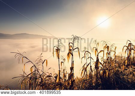 Corn Field And Landscape Meadow At Morning Sunrise Background, Rural Agriculture Fields With Mountai