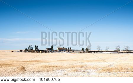 A Prairie Farm On A Snow Covered Harvested Field In Rocky View County Alberta Canada.