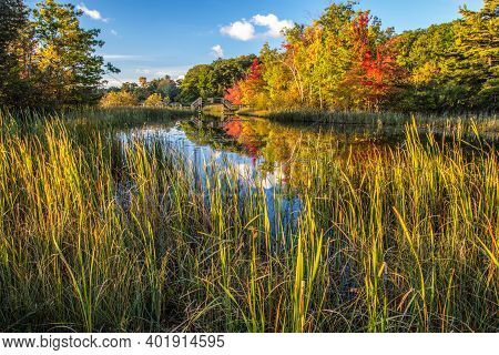 Autumn Wilderness Wetlands Background. Vibrant Autumn Colors And Forest Surround A Protected Wetland
