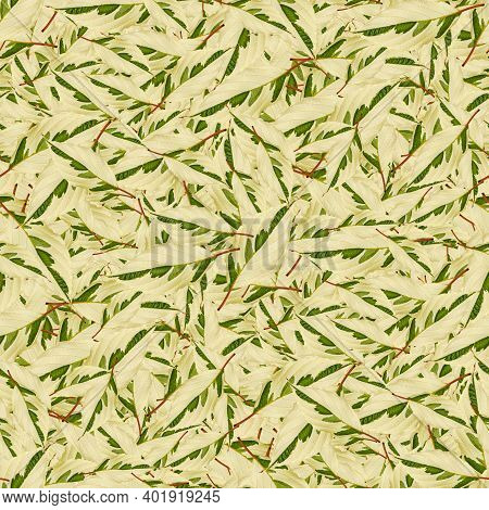 Green Leaves Seamless Background-texture Pattern For Continuous Playback. For Design And Creativity