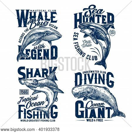 Tshirt Prints With Hummer Head Shark, Killer And Blue Whales, Vector Mascots For Fishing, Diving Or