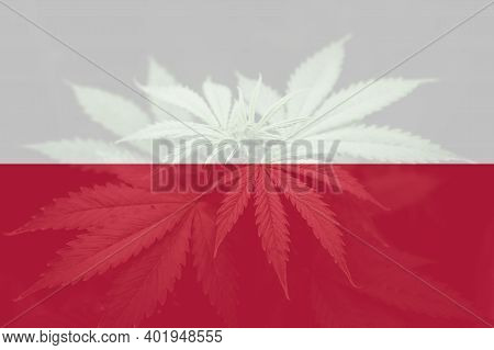 Weed Decriminalization In Poland. Cannabis Legalization In The Poland. Medical Cannabis In The Polan