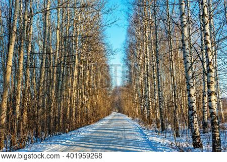 Road In A Birch And Poplar Grove On A Sunny Winter Day