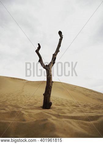 Isolated Leafless Bald Deserted Dry Dead Tree Trunk Log Stump Stub Branch Erosion On Slopes Of Sand