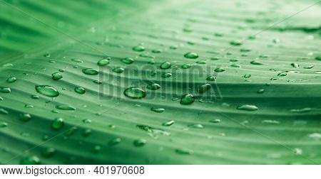 Water Droplets On The Green Leaves Of Nature