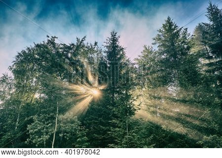 Sunbeams Breaking Through Trees. Morning Sun Beams In The Summer Forest. Beautiful Morning In The Fo