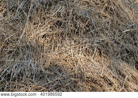Rice Straw Paddy Storage Grass Background In Indian Agriculture Field.