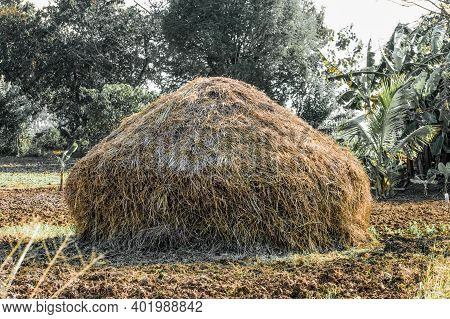 Rice Straw, Paddy Storage Hut Like Structure In India.