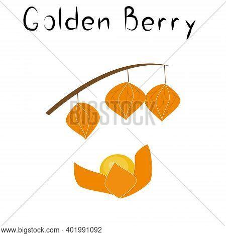 Physalis Or Golden Berries. Healthy Detox Natural Product. Organik Dietary Supplement Fruit. Superfo