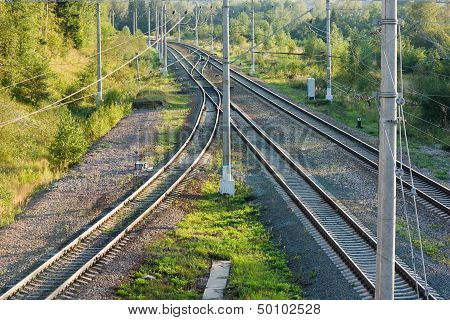 Railroad Tracks In Forest Horizontal View