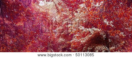 Spring Nature Texture