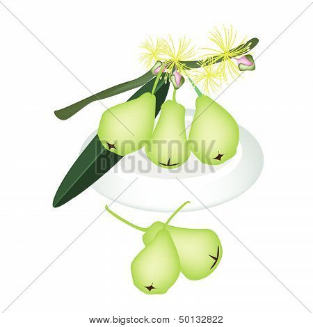 Green Water Apple On A White Plate