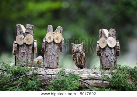 An Eastern Screech Owl hanging out with a few of his woodsey friends poster